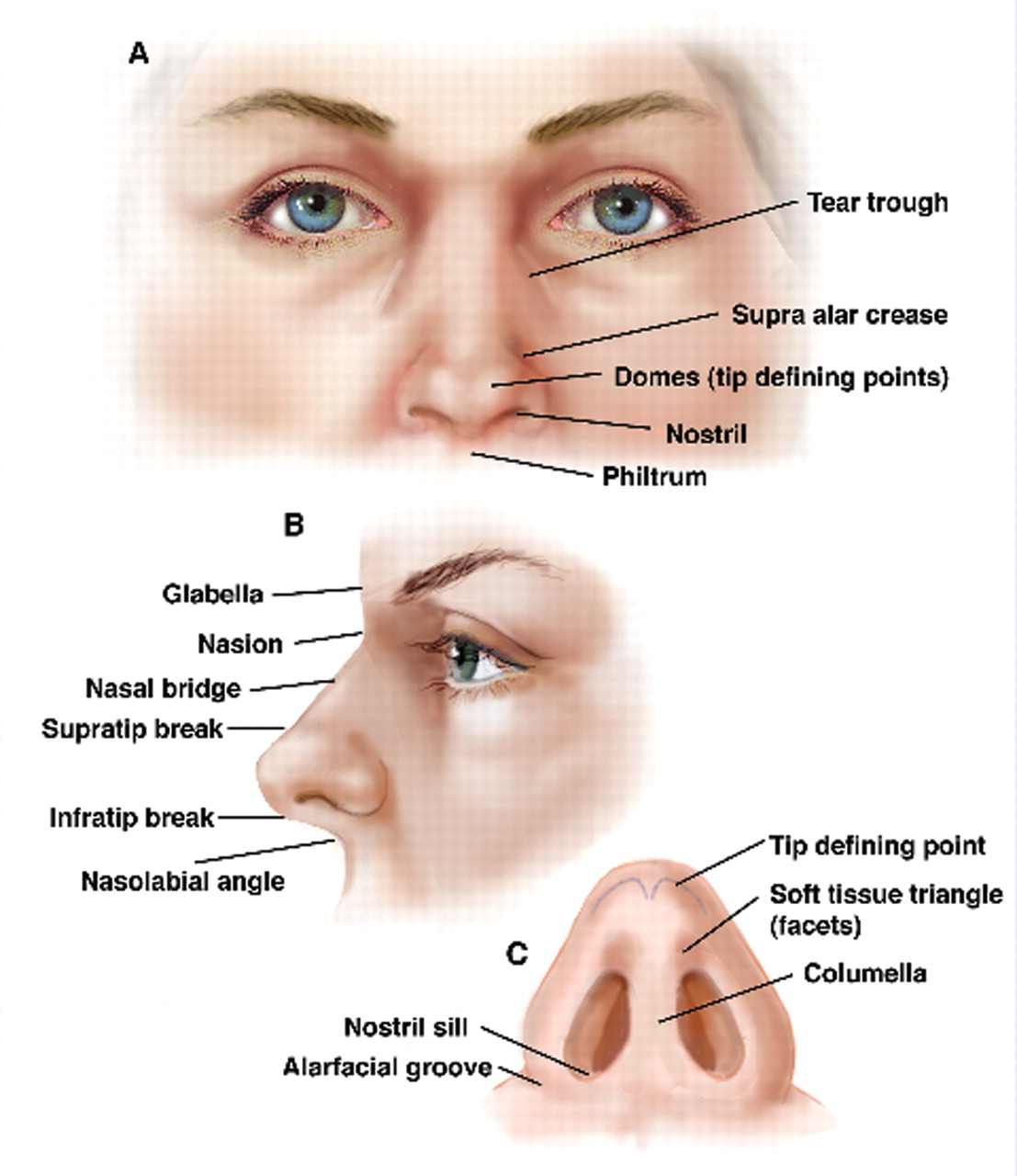 nose-anatomy | dramatic context